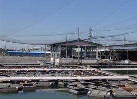 日本金魚卸売市場の写真