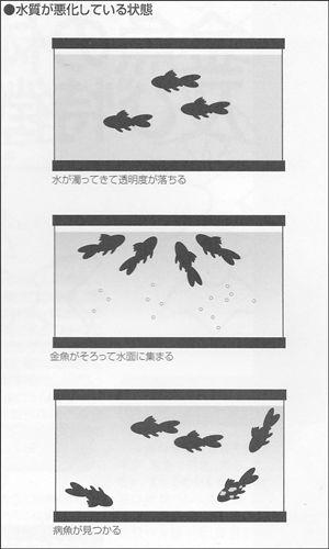 水質に注意する図1