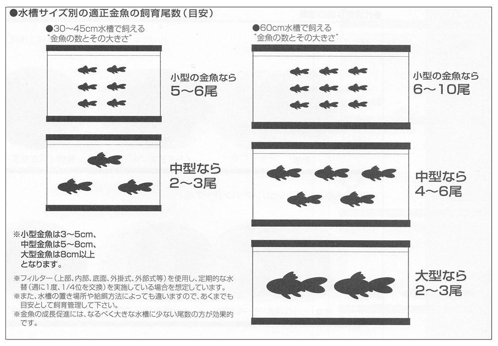水槽サイズ別の適正金魚の飼育尾数